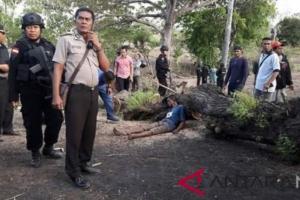 Ini Kronologi 6 Orang Tewas Usai Rebut Lahan di Adonara, Flores Timur