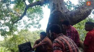 Demi Rapat Online, Kades di Flotim Terpaksa Panjat Pohon Cari Sinyal